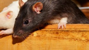 Are you throwing money down a rat hole?